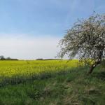 Urlaub mit Hund im Ruppiner Land in Brandenburg