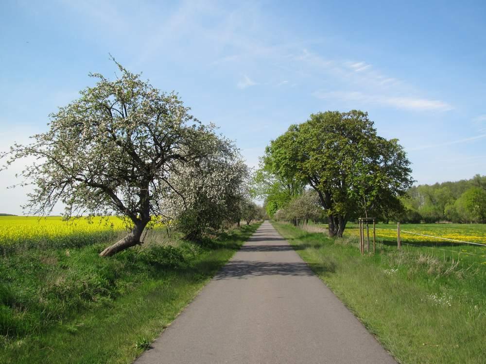 Weg zwischen den Feldern unweit des Ruppiner Sees