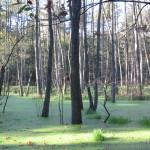 Ausflug mit Hund ins Briesetal bei Birkenwerder