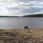 Ausflug mit Hund an den Langen See (Dahme)