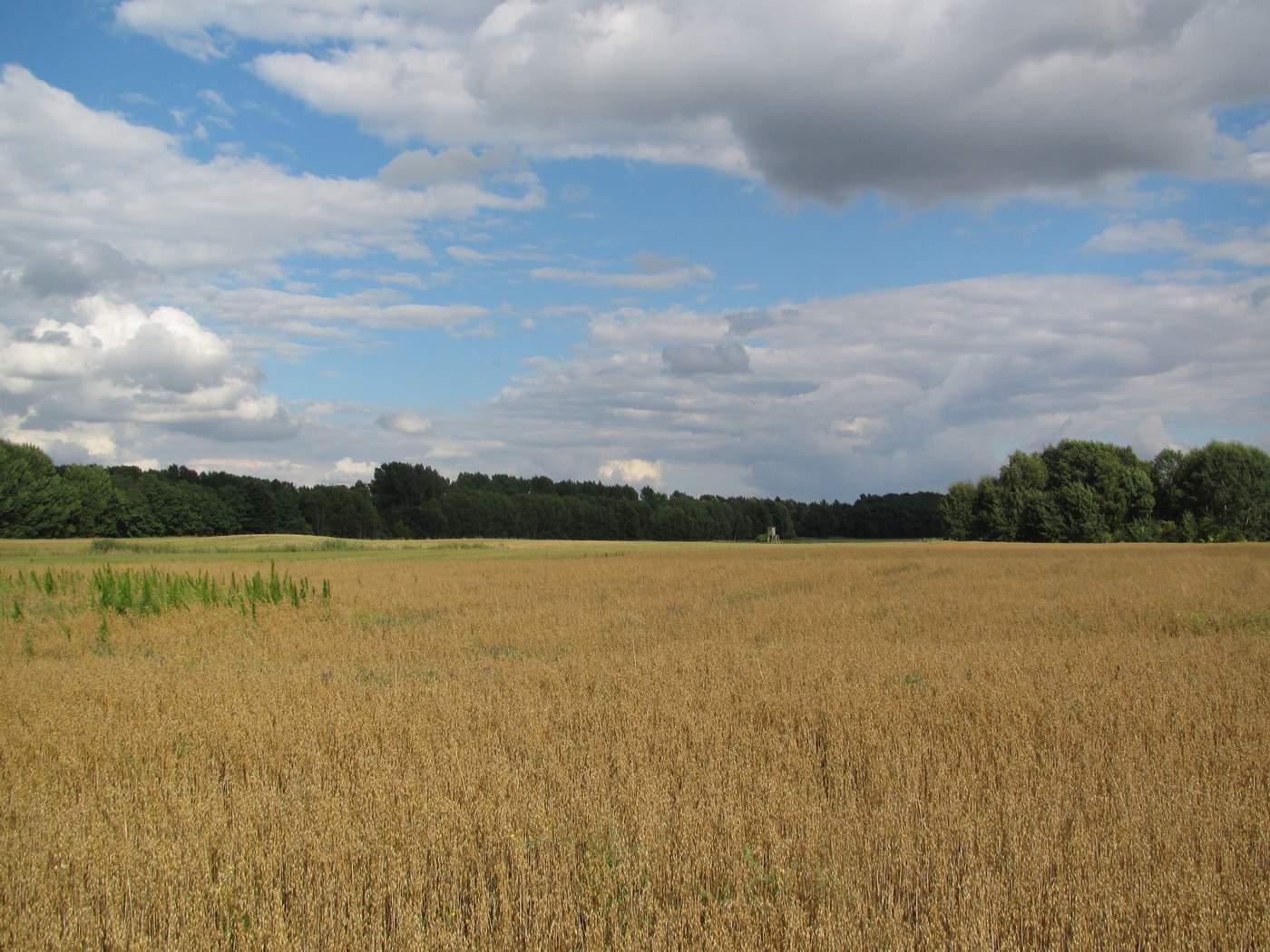 Feld in der Umgebung