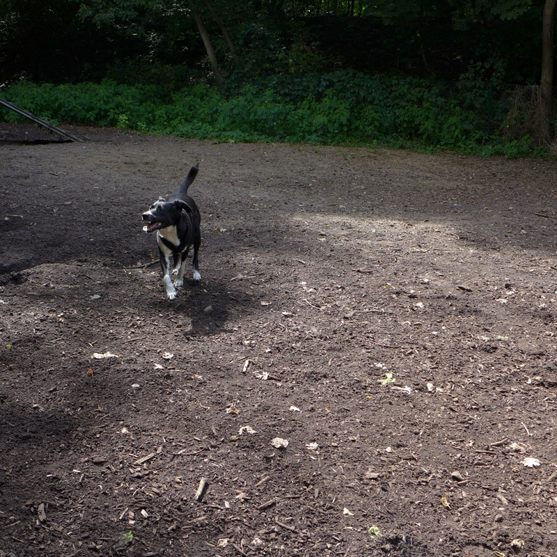 Fröhlicher Hund im Hundegarten