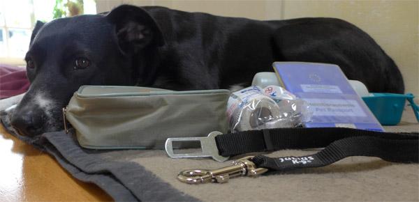 Alfa mit einem Teil der Ausrüstung für den Hundeurlaub