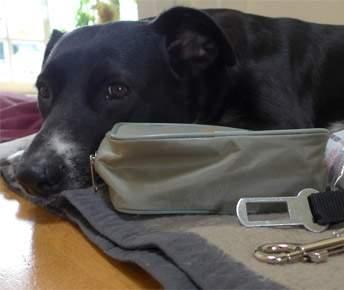 Packliste Hundeurlaub