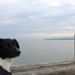 Gute und schlechte Erlebnisse am Neusiedler See