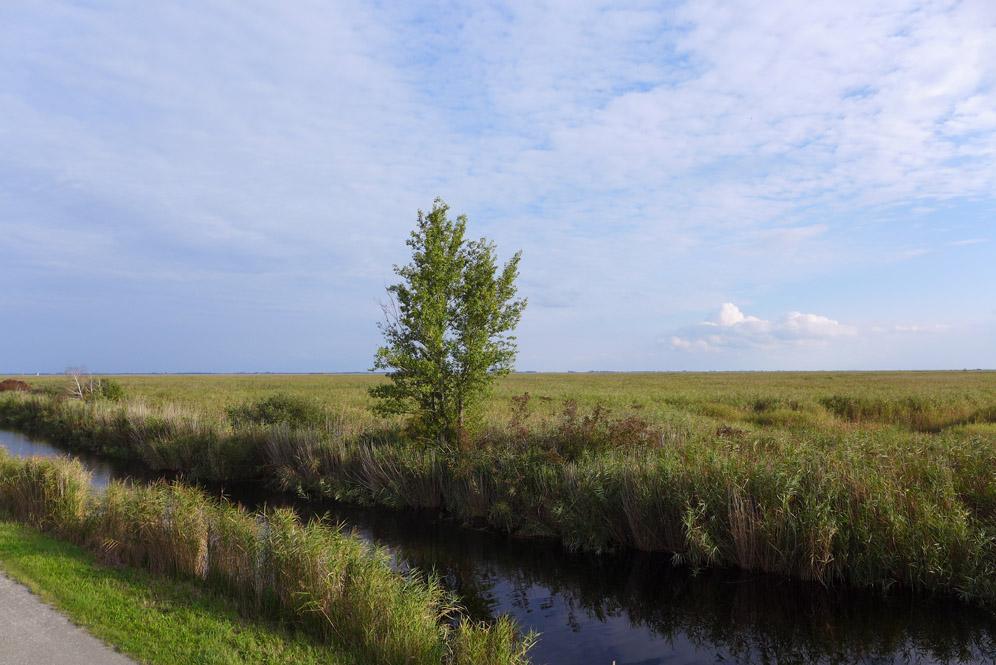 Schilflehrpfad am Purbacher Kanal