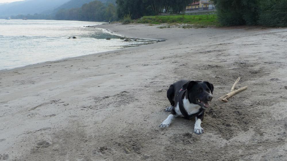 Sandstrand an der Donau