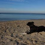 Ausflugsziele mit Hund in Mecklenburg-Vorpommern