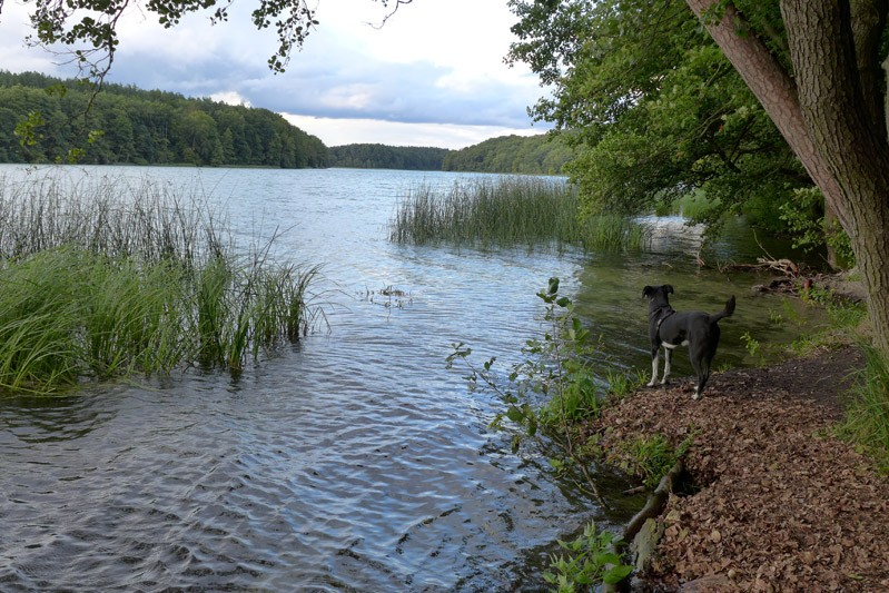 Liepnitzsee-hund-sommer (2)