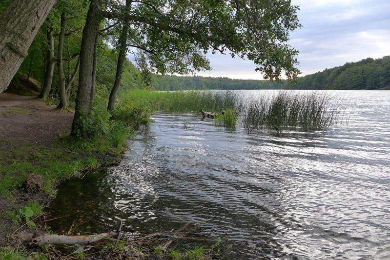 Liepnitzsee-hund-sommer (3)