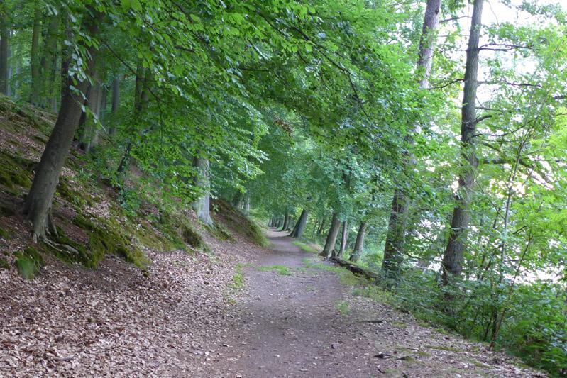 Liepnitzsee-hund-sommer (5)