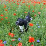 Meine schönsten Urlaubs- und Hundefotos 2014