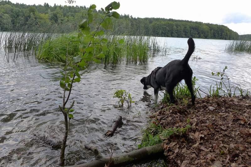 Liepnitzsee-hund-sommer4