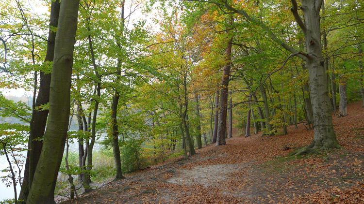 Herbst am Liepnitzsee