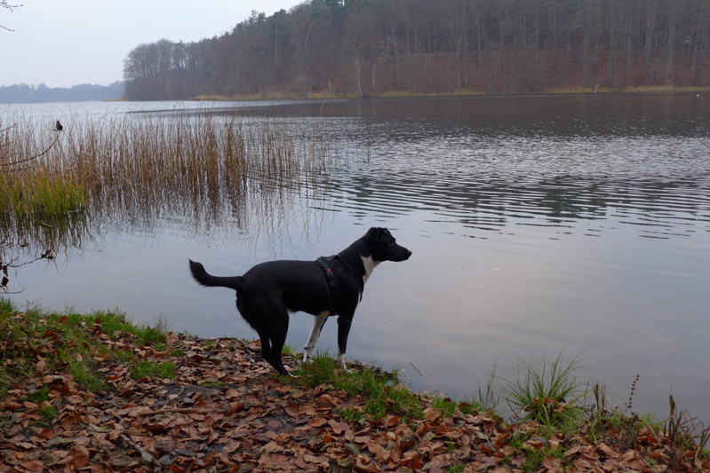 Tagsüber einen langen Spaziergang in ruhiger Umgebung machen
