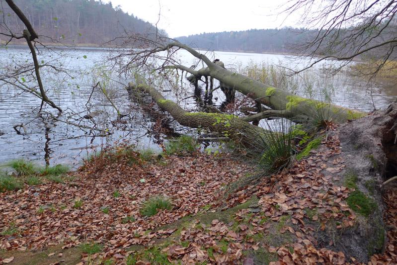 liepnitzsee-hund-herbst (2)