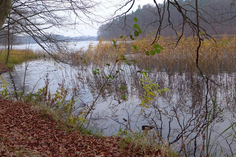 liepnitzsee-hund-herbst (3)