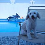 Leben mit Hund in Dubai