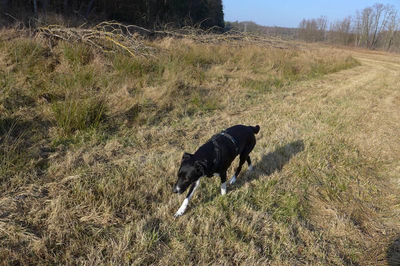 Ausflug-Hund-Trebusersee (11)