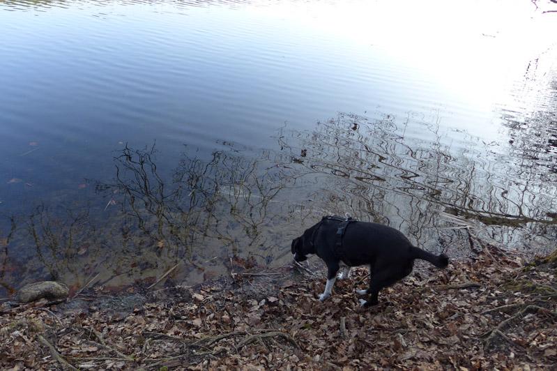 Ausflug-Hund-Trebusersee (2)