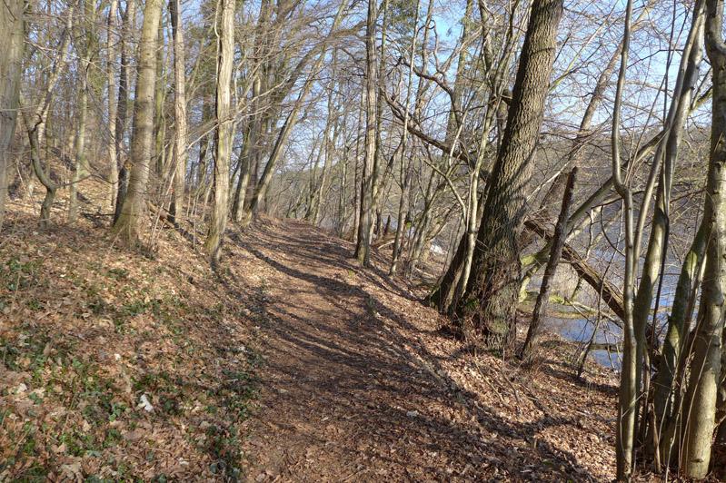Ausflug-Hund-Trebusersee (4)