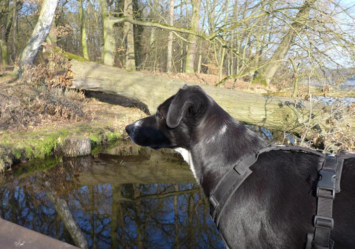 Ausflug-Hund-Trebusersee (8)
