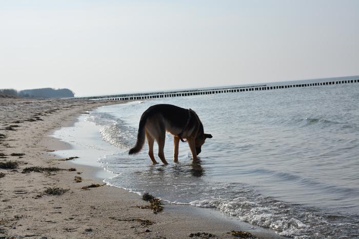 Arthur auf der Insel Poel