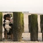 Zeeland – Urlaub im Hundeparadies an der Nordsee