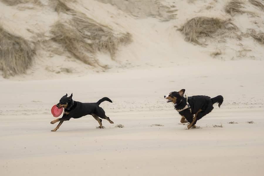 urlaub-hund-zeeland5