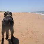 Langzeitreisen mit Hund durch Griechenland