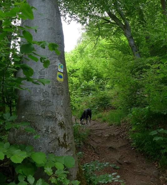 Steil nach oben durch den Wald