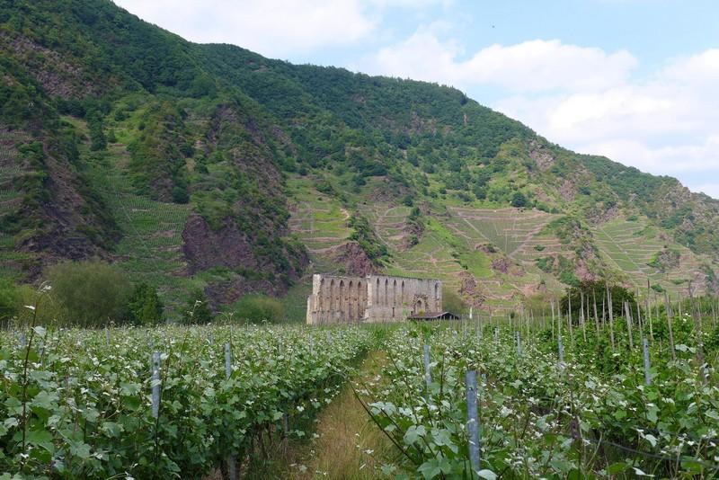 Klosterruine Stuben vor dem Bremmer Calmont