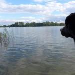 Ausflugsziele mit Hund – Brandenburg Norden+Osten