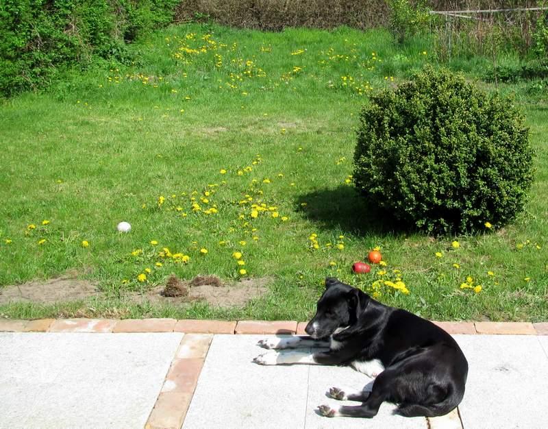 Terrasse und Garten des Ferienhauses