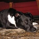Tipps für ein entspanntes Silvester mit Hund zuhause