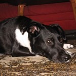 ruhiges silvester mit hund in stolpe auf usedom. Black Bedroom Furniture Sets. Home Design Ideas