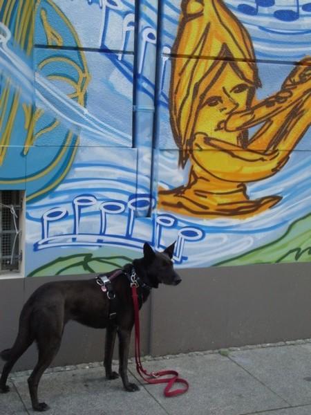Dresden-Urlaub-mit-Hund (1)
