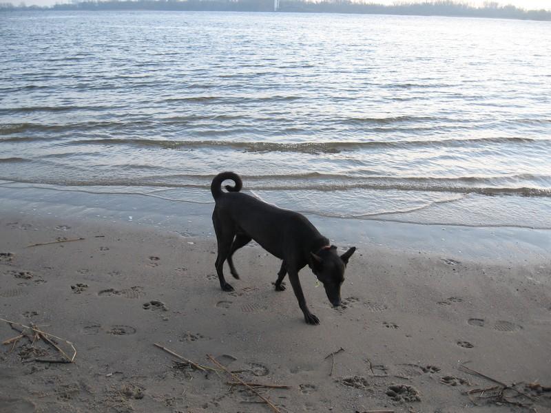 Amy am Strand