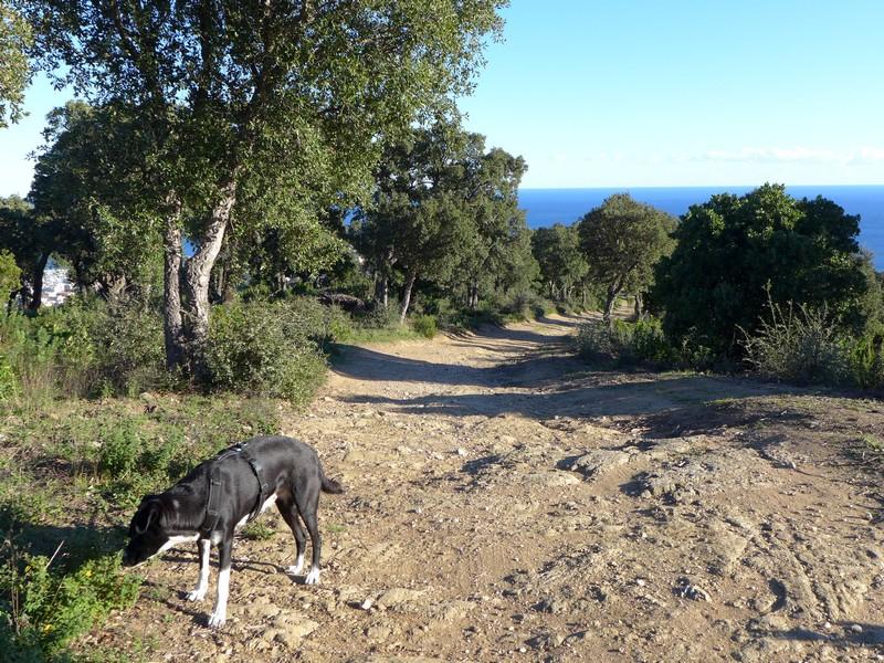 Spaziergang oberhalb von Cavalaire