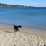 Die Côte d'Azur mit Hund im Winter erleben