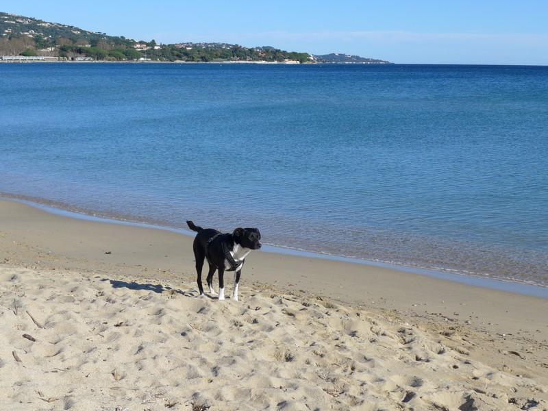 Alfa an der Côte d'Azur