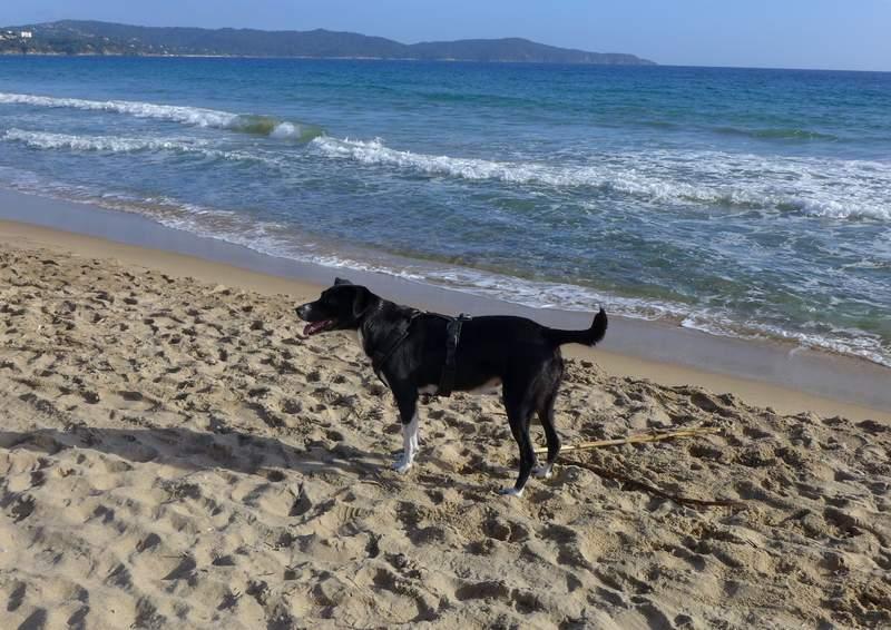 Glücklich am Sandstrand und am Meer