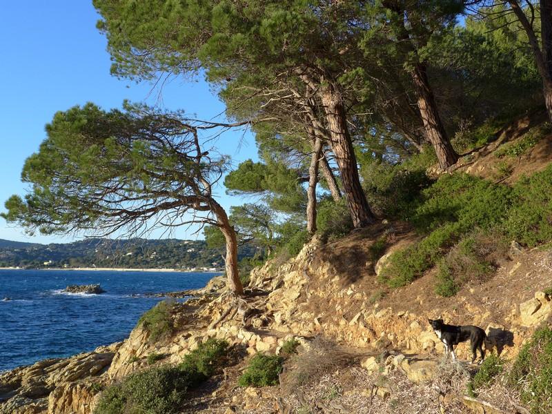 Küstenwanderung auf der Halbinsel von St. Tropez