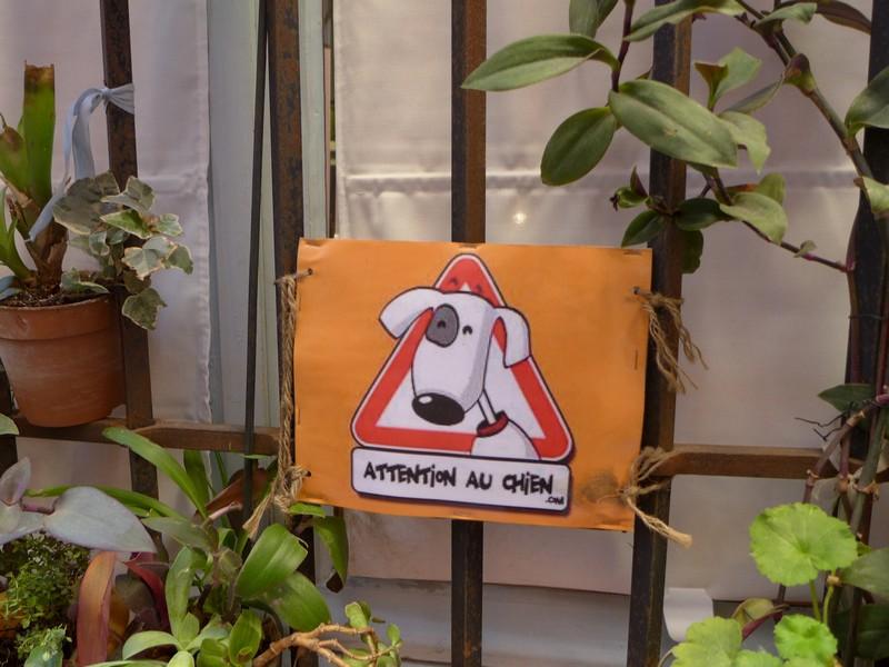 St-Tropez-mit-hund-urlaub-winter (13)