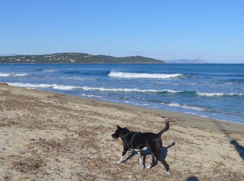 Alfa am Strand von Pampelonne