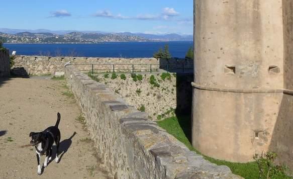 Zitadelle von St.Tropez mit Hund