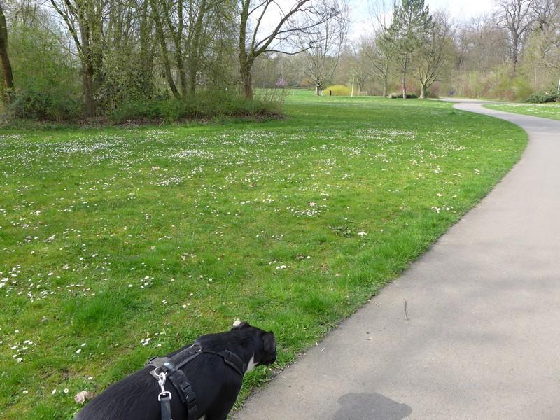 agra-Park mit Hund
