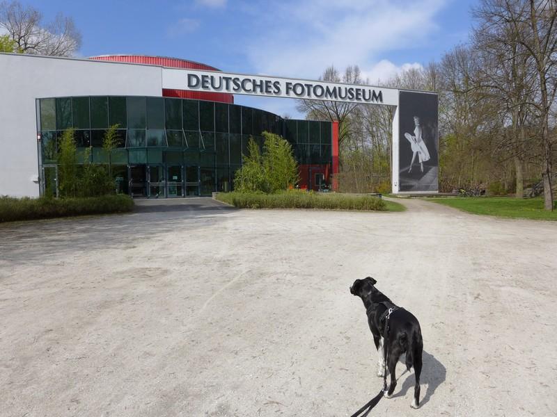 Alfa vor dem Deutschen Fotomuseum - Hunde sind erlaubt