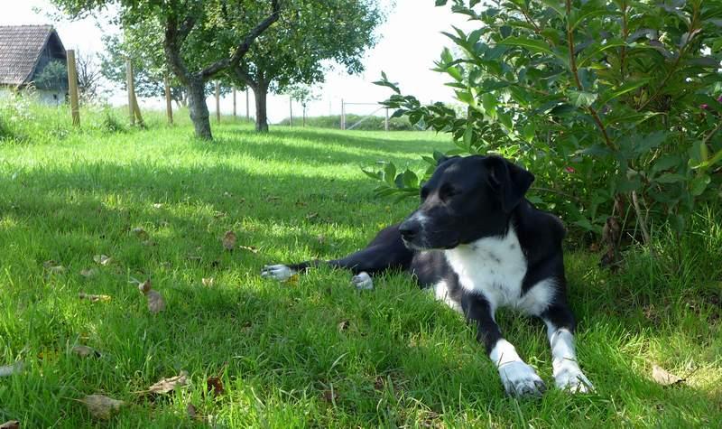 garten-hund-südburgenland