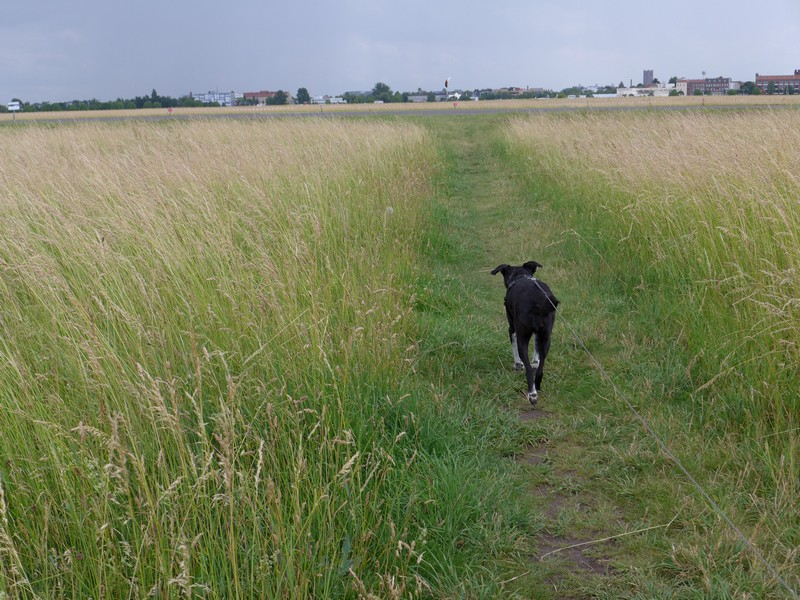 Ausflug-Hund-Berlin-Tempelhofer-Feld (12)